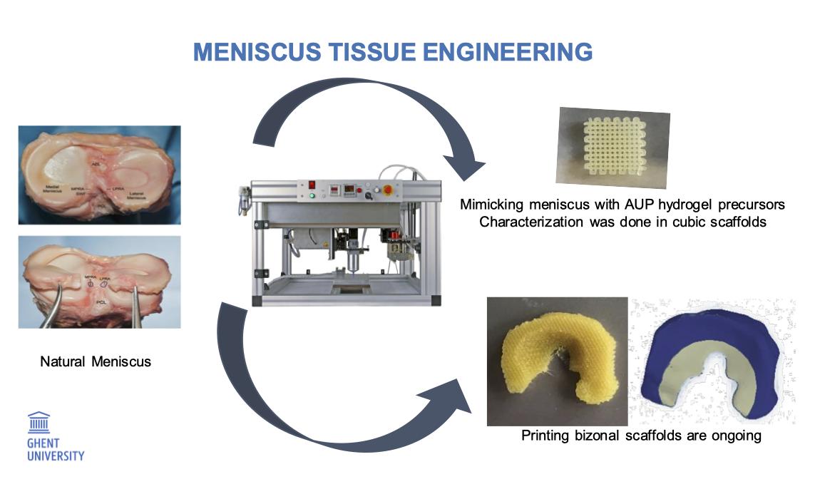 Meniscus Tissue Engineering